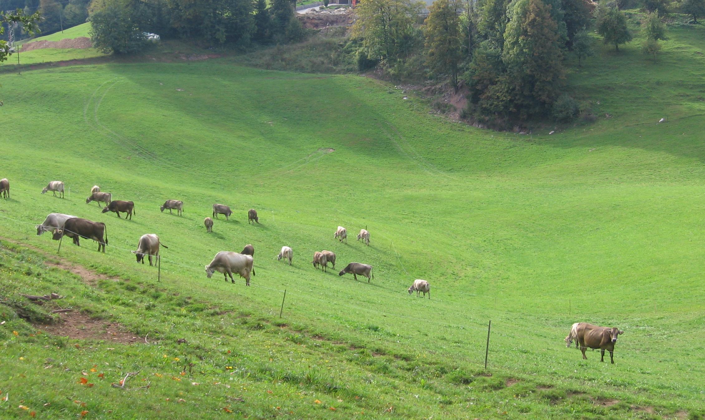Bločanka in zver – slovenski triler